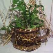 Кашпо-для цветов, из ивовой лозы.